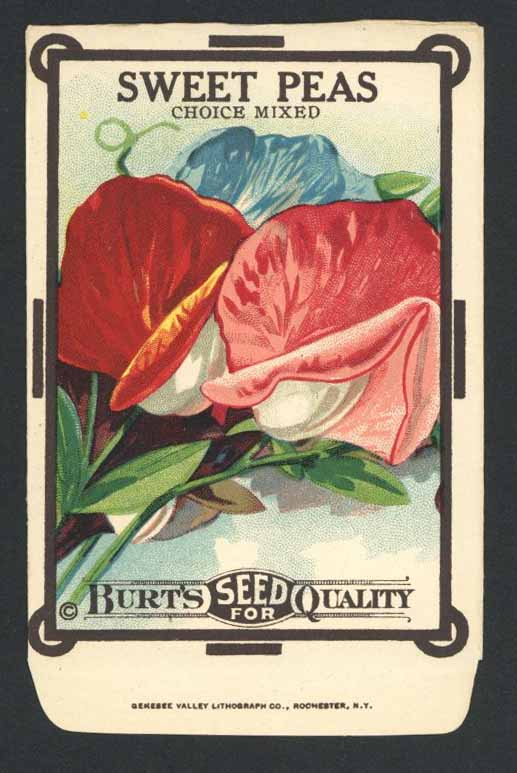 Sweet Peas Antique Burt's Seed Packet