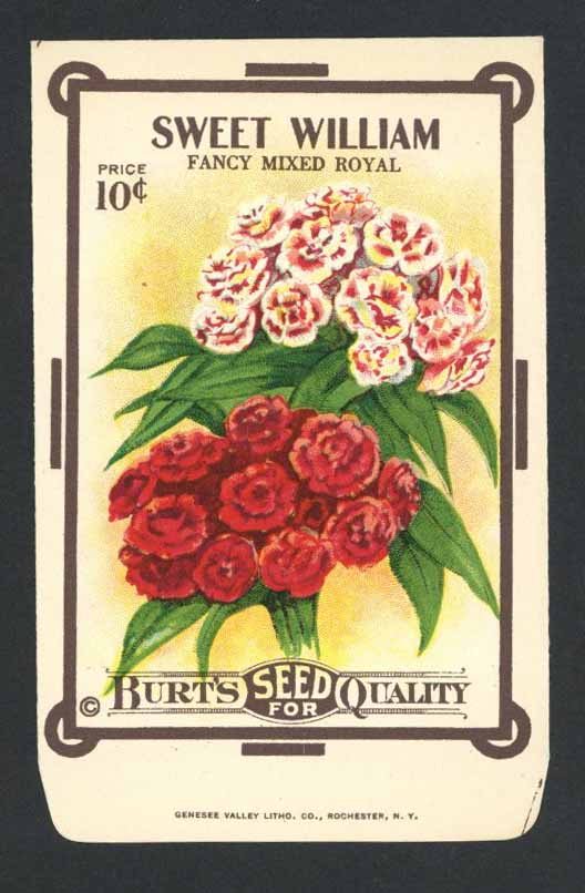Sweet William Antique Burt's Seed Packet