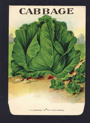 Cabbage Antique Genesee Valley Litho. Seed Packet, 615