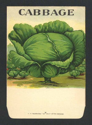 Cabbage Antique Genesee Valley Litho. Seed Packet, 645