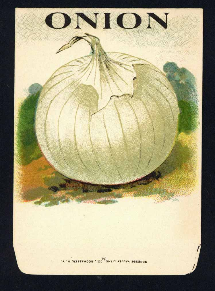 Onion Antique Genesee Valley Litho. Seed Packet, 211