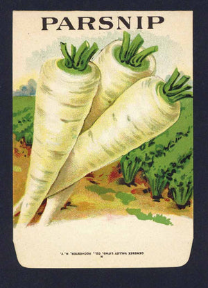 Parsnip Antique Genesee Valley Litho. Seed Packet, 622