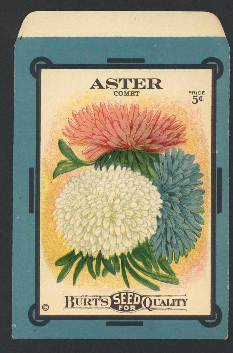 Aster Antique Burt's Seed Packet, L