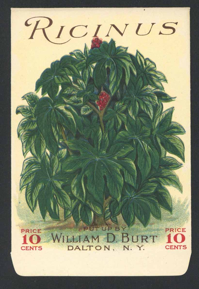 Ricinus Antique Burt's Seed Packet, L
