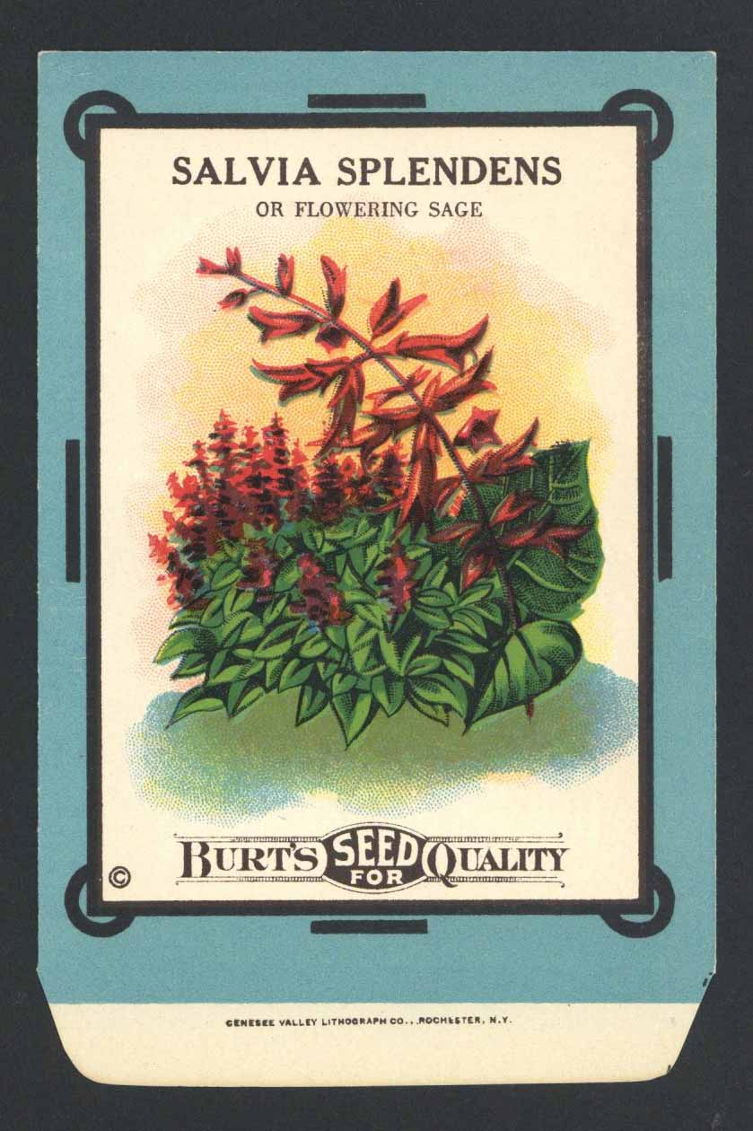 Salvia Splendens Antique Burt's Seed Packet, L
