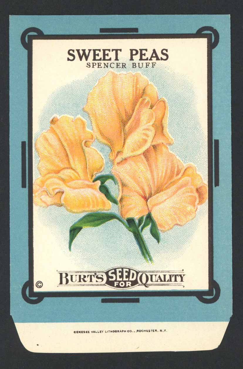 Sweet Peas Antique Burt's Seed Packet, L, Spencer Buff
