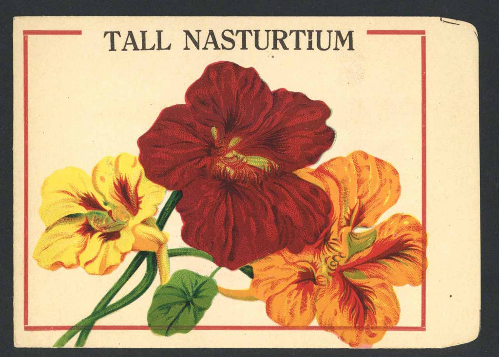 Tall Nasturtium Antique Burt's Seed Packet, L