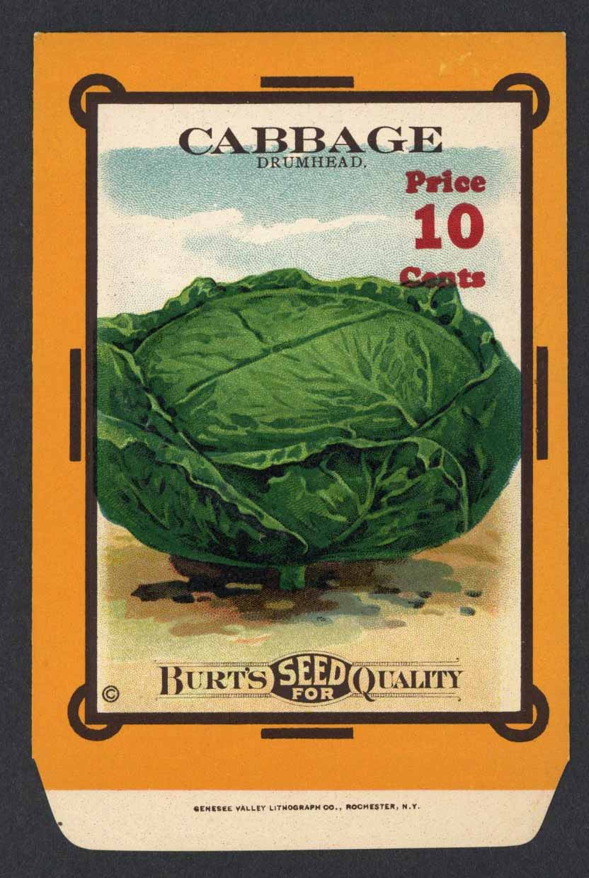 Cabbage Antique Burt's Seed Packet, Drumhead, L