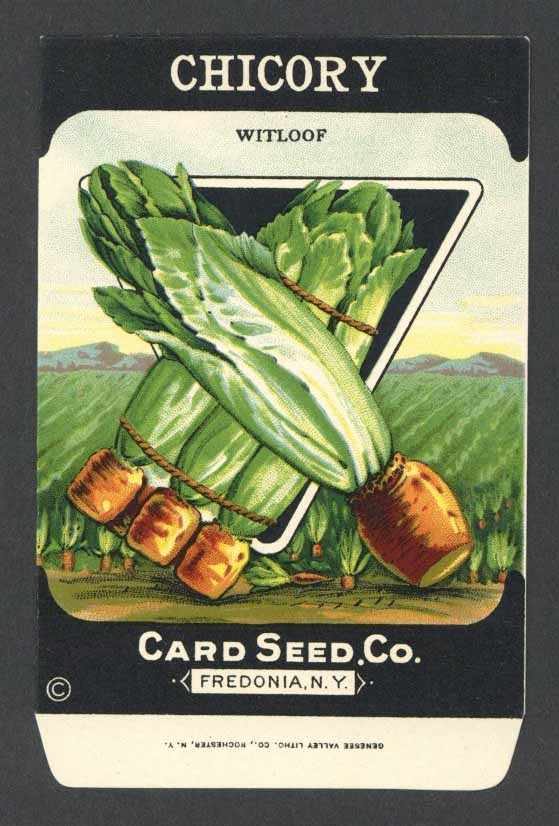 Chicory Antique Card Seed Co. Packet