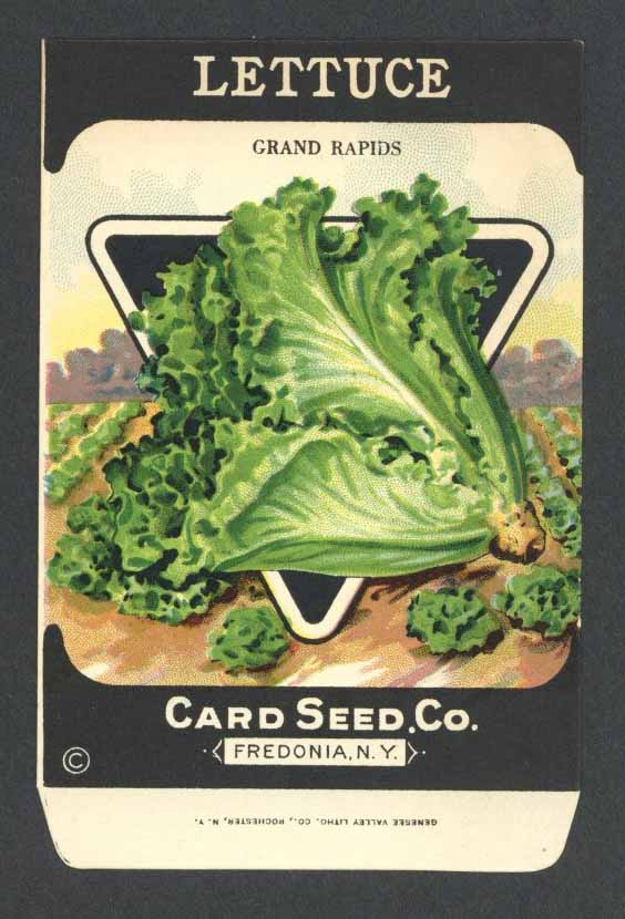 Lettuce Antique Card Seed Co. Packet, Grand Rapids