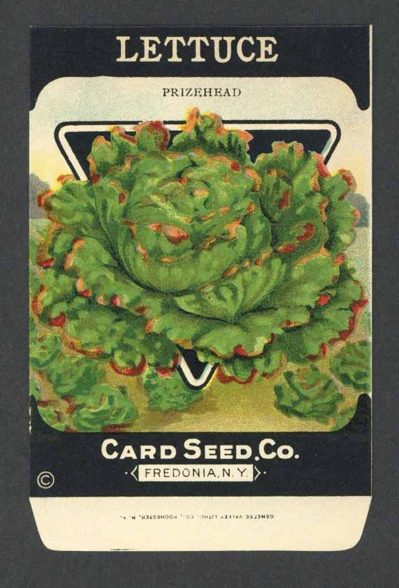 Lettuce Antique Card Seed Co. Packet, Prizehead