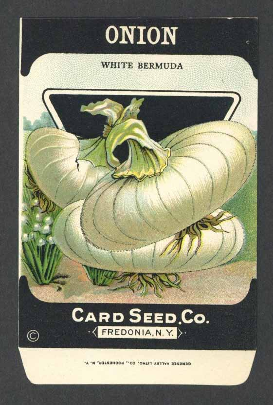 Onion Antique Card Seed Co. Packet, White Bermuda
