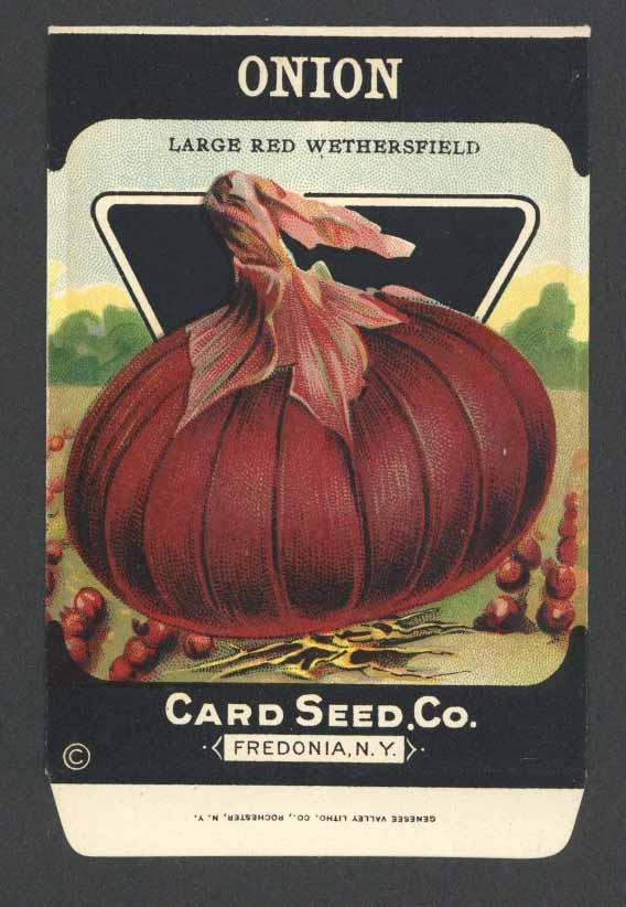 Onion Antique Card Seed Co. Packet, Red Wethersfield