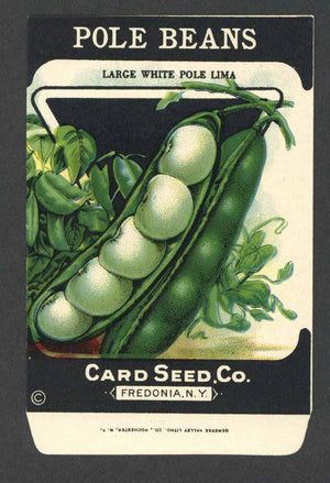 Pole Beans Antique Card Seed Co. Packet, White Pole Lima