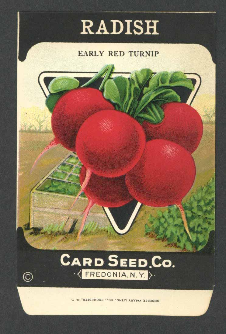 Radish Antique Card Seed Co. Packet, Early Red Turnip