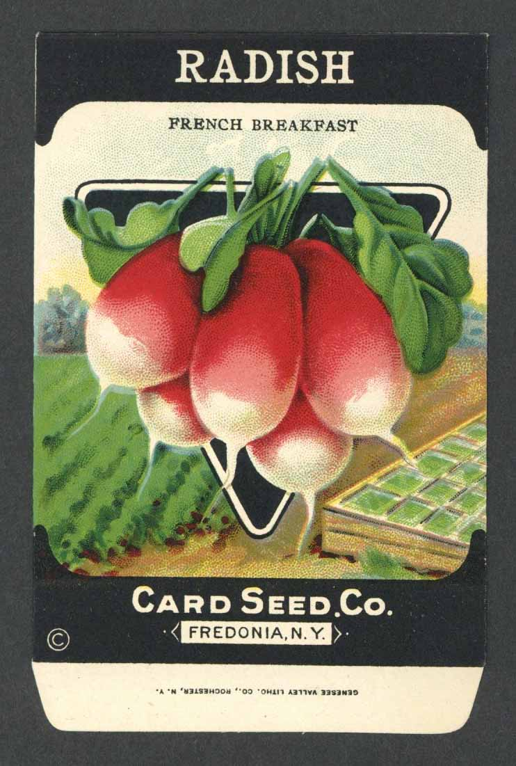 Radish Antique Card Seed Co. Packet, French Breakfast