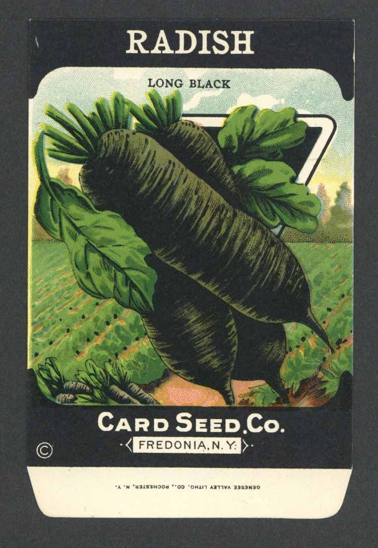 Radish Antique Card Seed Co. Packet, Long Black
