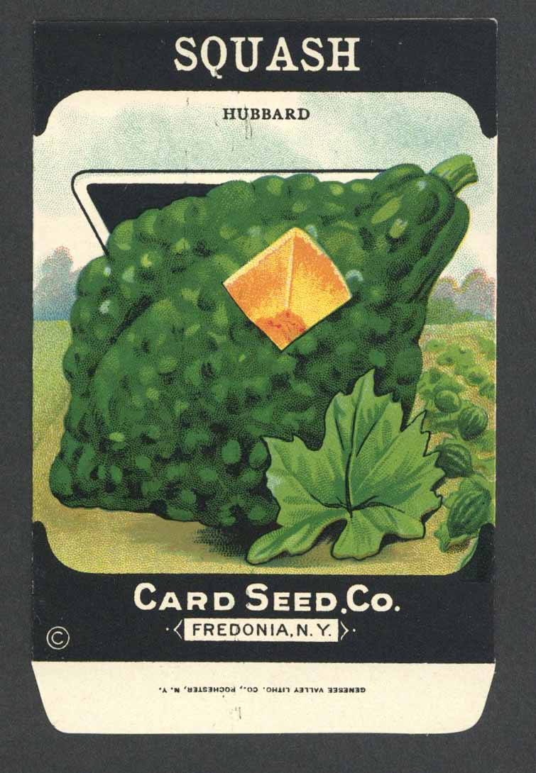 Squash Antique Card Seed Co. Packet, Hubbard