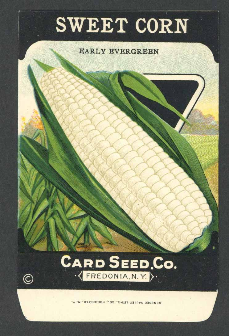 Sweet Corn Antique Card Seed Co. Packet, Early Evergreen