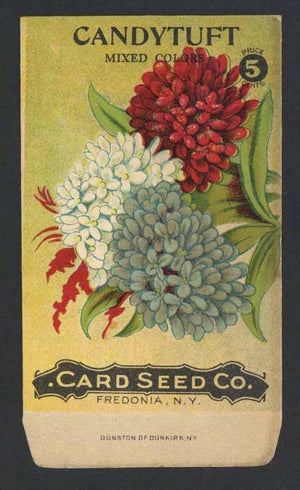 Candytuft Antique Card Seed Co. Packet