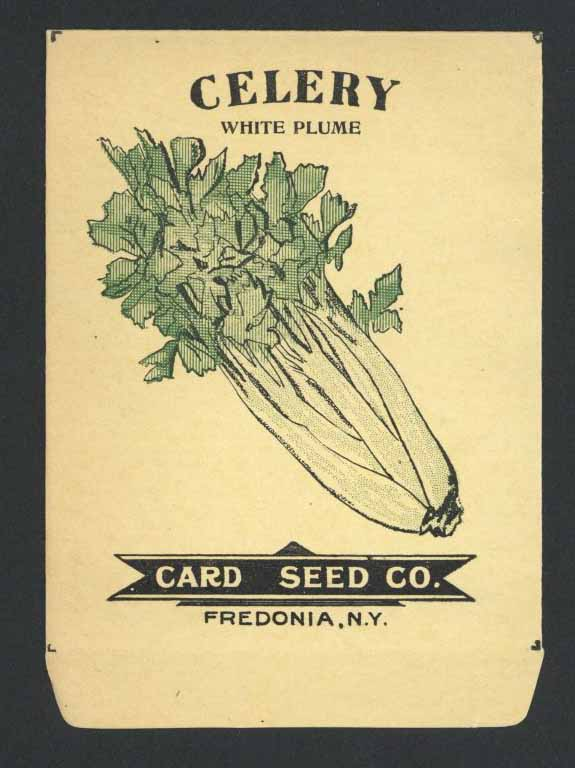Celery Antique Card Seed Co. Packet
