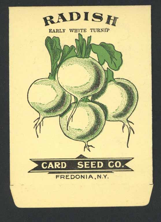 Radish Antique Card Seed Co. Packet, Early White Turnip