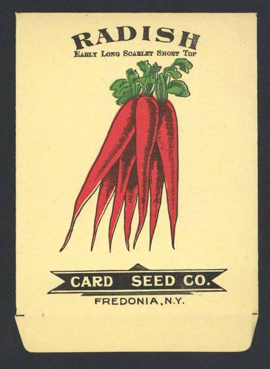 Radish Antique Card Seed Co. Packet, Long Scarlet