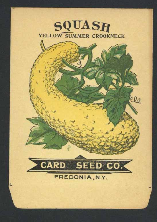Squash Antique Card Seed Co. Packet, Crookneck