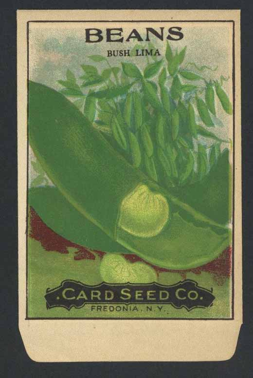 Beans Antique Card Seed Co. Packet, Bush Lima