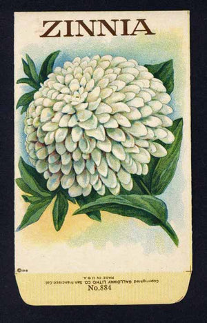 Zinna Antique Stock Seed Packet