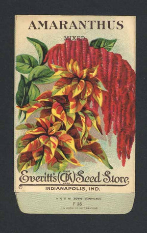 AMARANTHUS Antique Everitt's Seed Packet ( SPE005)