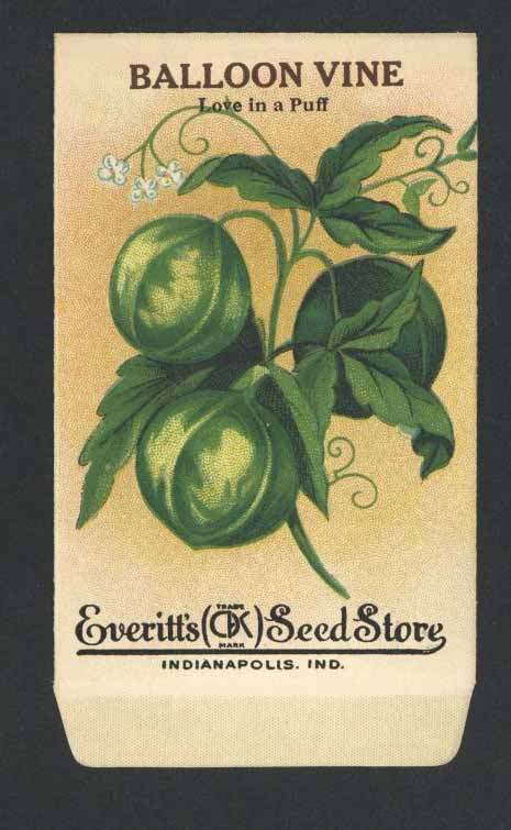 BALLOON VINE Antique Everitt's Seed Packet ( SPE011)