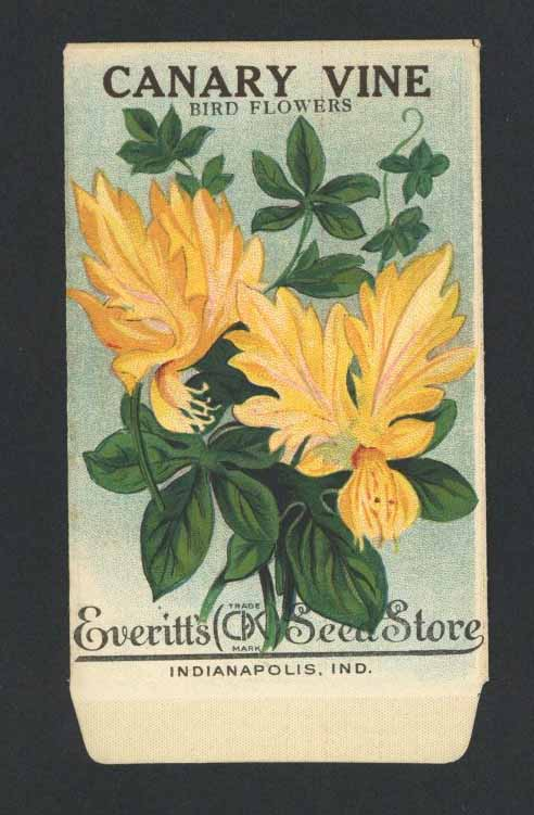 Canary Vine Antique Everitt's Seed Packet