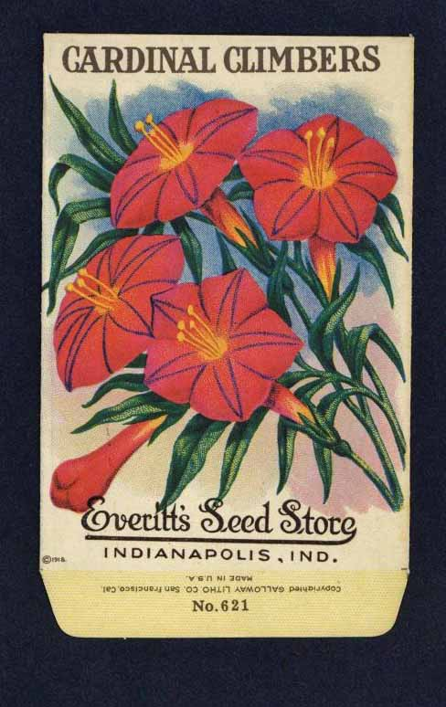 Cardinal Climbers Antique Everitt's Seed Packet