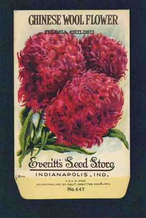 Chinese Wool Flower Antique Everitt's Seed Packet