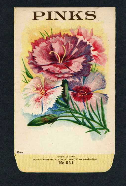 Pinks Antique Stock Seed Packet