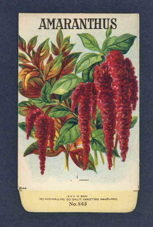 AMARANTHUS Antique Stock Seed Packet ( SPE025)