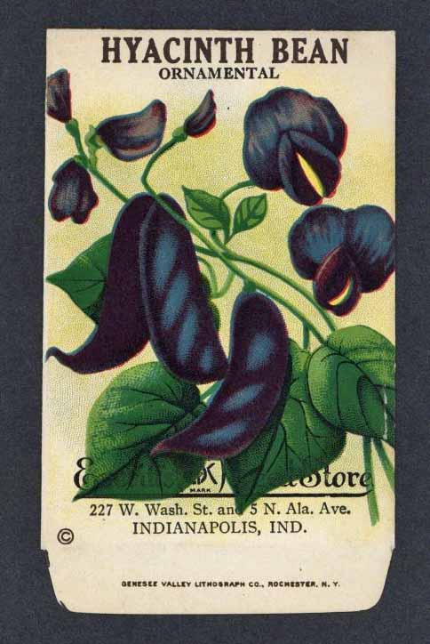 Hyacinth Bean Antique Everitt's Seed Packet