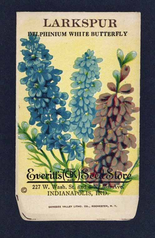 LARKSPUR Antique Everitt's Seed Packet ( SPE035)