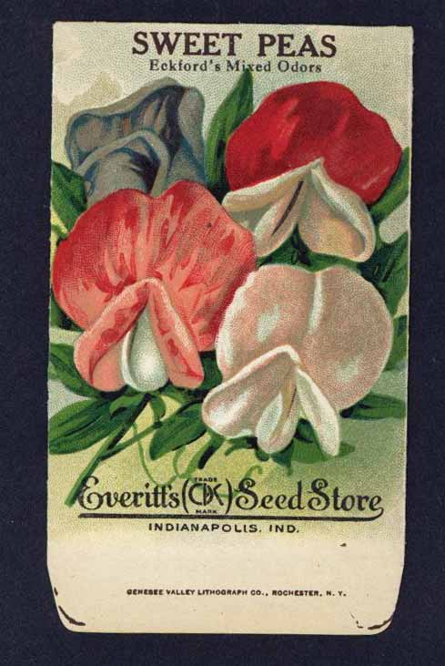 Sweet Peas Antique Everitt's Seed Packet, Eckford's Mixed Odors