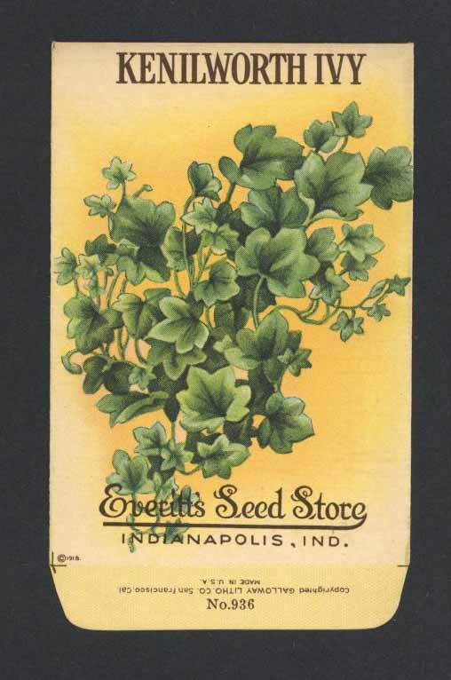 Kenilworth Ivy Antique Everitt's Seed Packet