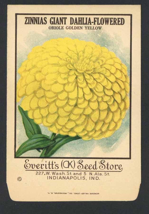 Zinnas Antique Everitt's Seed Pack, Oriole Golden Yellow