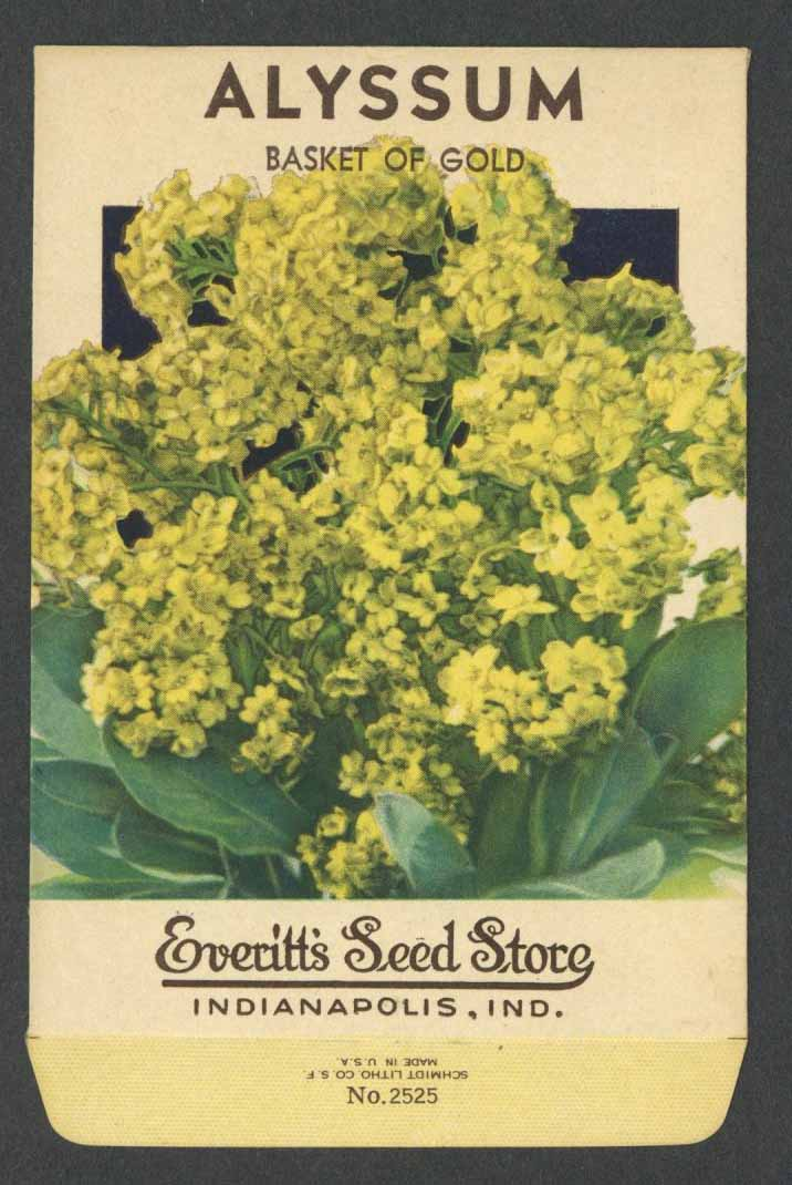 Alyssum Vintage Everitt's Seed Packet, Basket of Gold