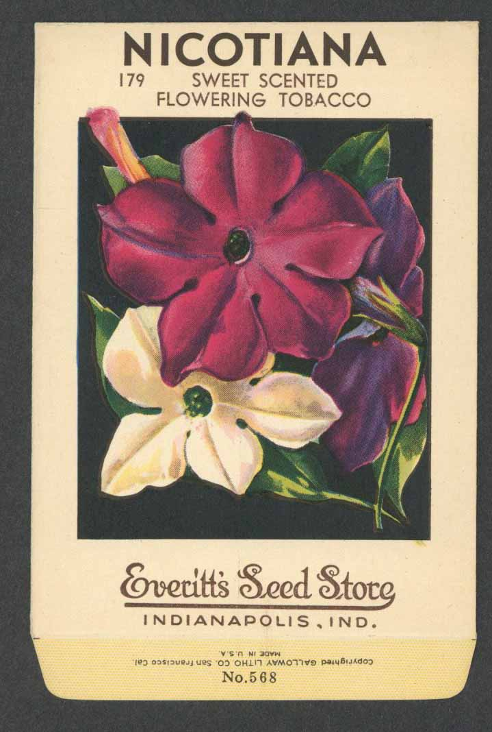Nicotiana Antique Everitt's Seed Packet, Sweet Scented