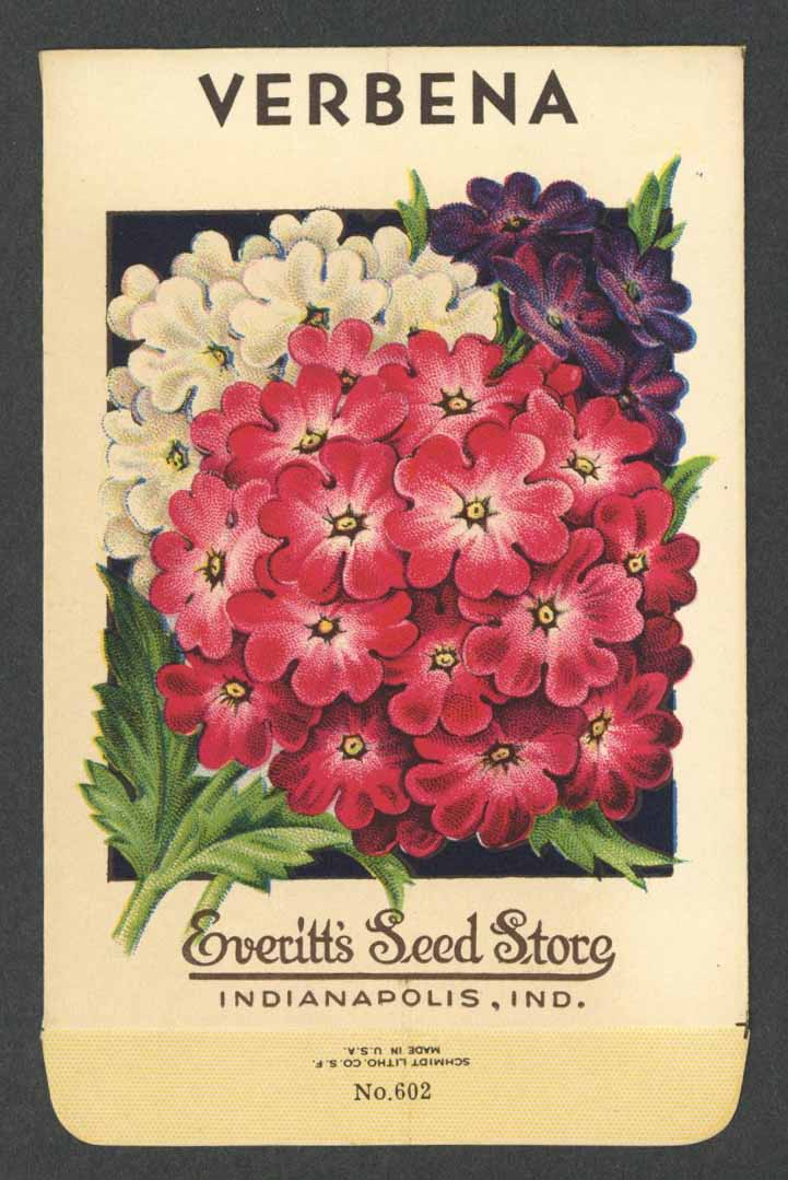 Verbena Antique Everitt's Seed Packet