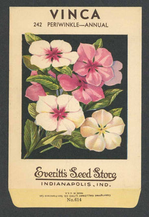 Vinca Antique Everitt's Seed Packet, Periwinkle