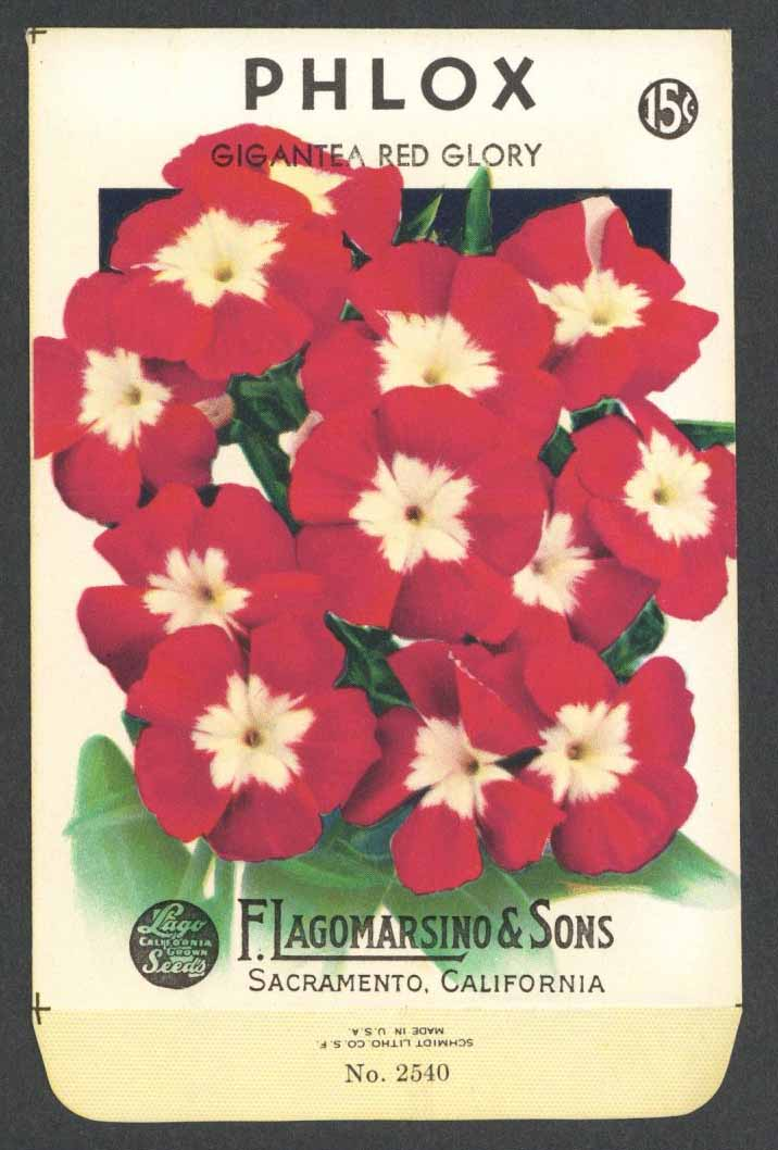 Phlox Vintage Lagomarsino Seed Packet, Red Glory