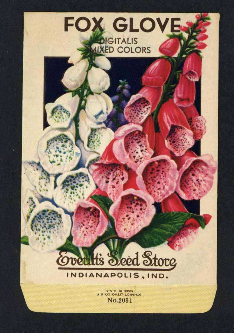 Fox Glove Vintage Everitt's Seed Packet, Digitalis