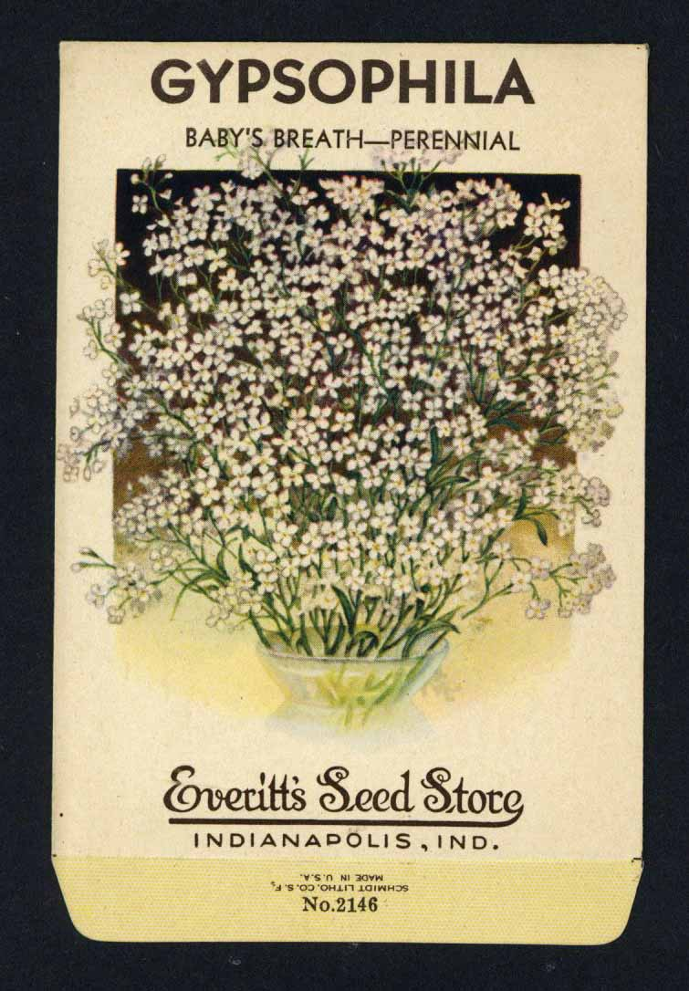 Gypsophila Vintage Everitt's Seed Packet, Baby's Breath