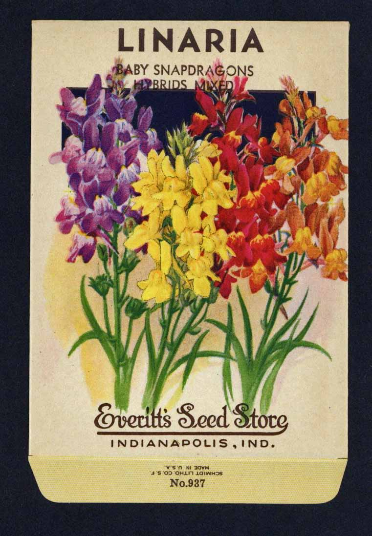 Linaria Vintage Everitt's Seed Packet, Baby Snapdragons